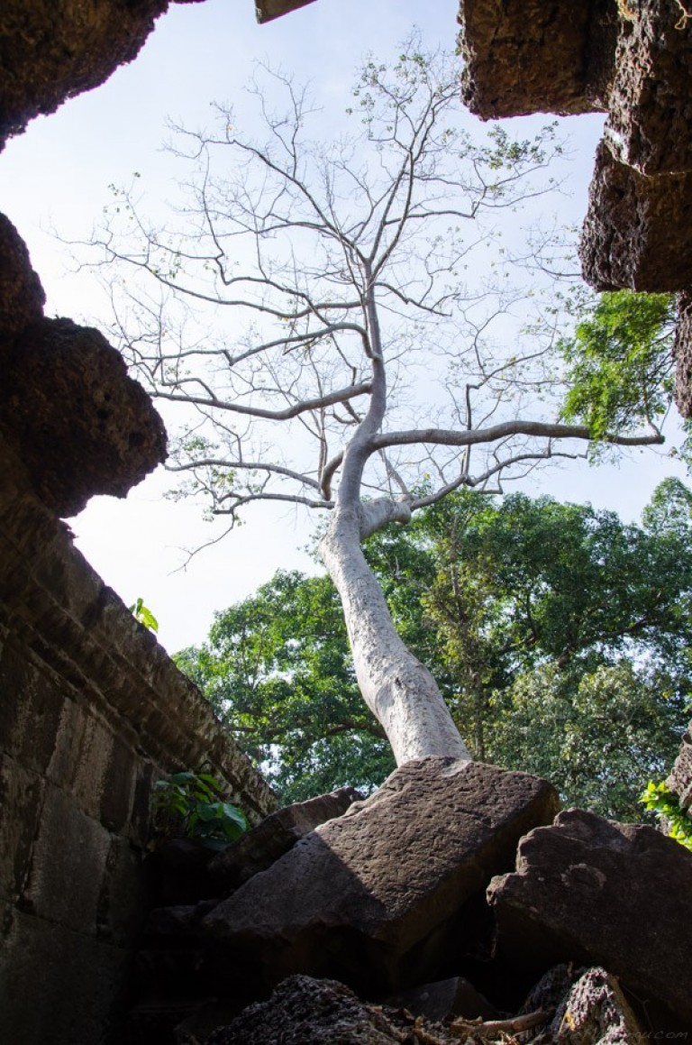 Cambodia siem reap ankor wat-49