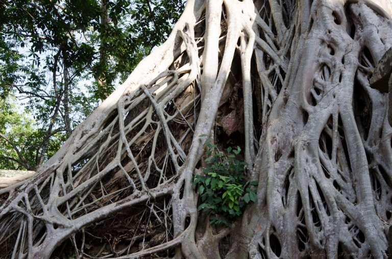 Cambodia siem reap ankor wat-54